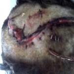 Stroika+cap+ferit